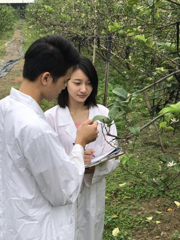 屏科大植醫系學生在檸檬園中進行健診。(屏東科技大學植醫系提供)