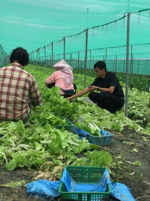 暴雨重創雲林蔬菜產區,農委會捉菜蟲卻沒有實績,農民怨聲載道。(資料照)