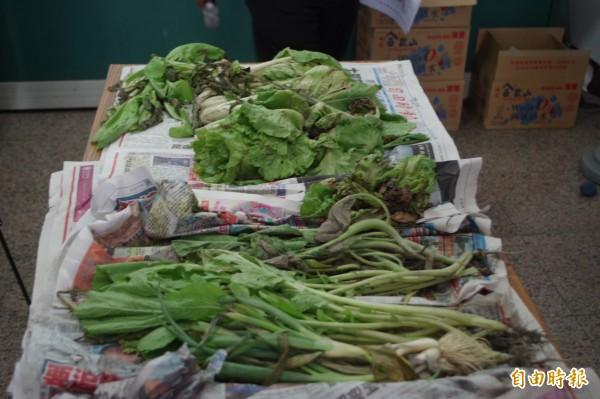 放晴後,蔬菜損害加劇。(記者林國賢攝)