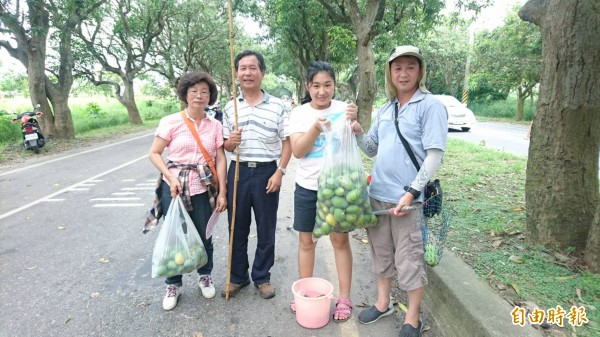 參加活動的民眾可以帶回戰利品土芒果。(記者楊金城攝)