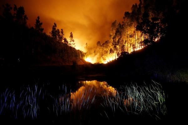 葡萄牙森林大火已造成39死。(路透)