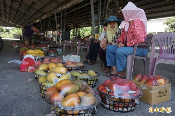 大內青果市場6到8月開張賣芒果,品種多元任君挑選。(記者黃文瑜攝)