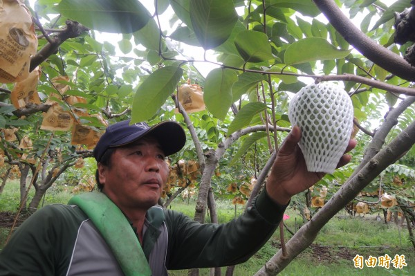 台東縣首度徵求農業師傅,月薪上看50K。(資料照,記者張存薇攝)