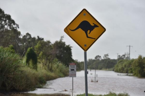 因袋鼠引起的交通事故,澳洲時有所聞。(資料照,法新社)
