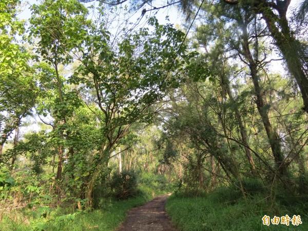 城西防風林生態相當豐富又多樣,為台江珍貴的寶地。(記者蔡文居攝)