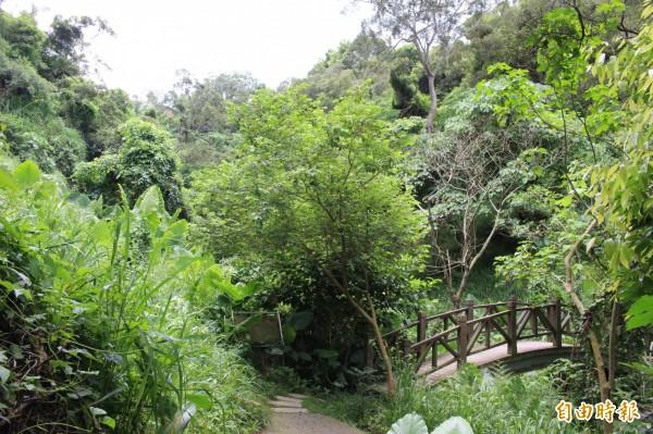 蓊鬱林木間有半圓弧狀的木棧橋。(記者張聰秋攝)