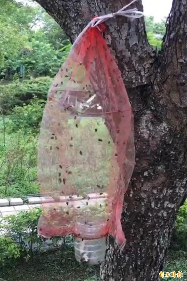 國道3號關西服務區店長林憲揚利用蒼蠅的習性,以回收的魚片、寶特瓶加上蔬菜網袋,製作的環保捕蠅籠,聰明「逮捕」蒼蠅。(記者黃美珠攝)