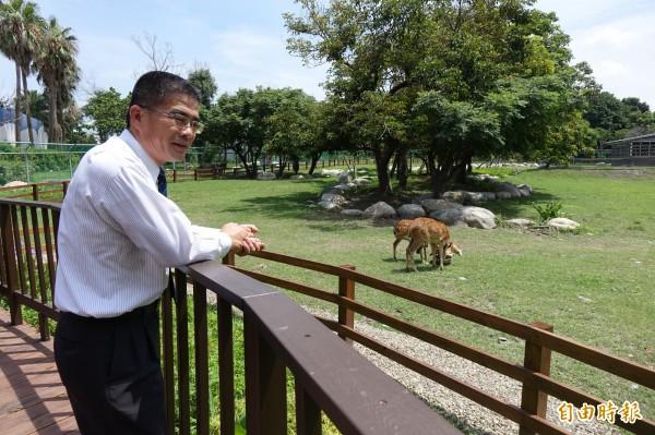 鹿港鎮長黃振彥一早就到生態公園,關心小鹿鹿情況。(記者劉曉欣攝)