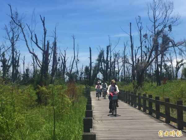 台東森林公園受尼伯特颱風重創,綠蔭未恢復,不過縣府已種回10萬5千棵樹苗。(記者張存薇攝)