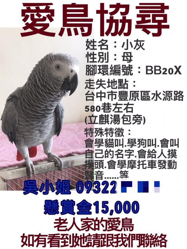 吳采芳在臉書po文並祭出重賞,協尋婆婆的愛鳥「小灰」。(吳采芳提供)