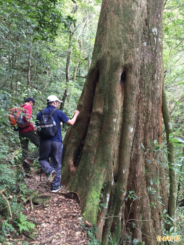 員警對於北得拉曼的巨木群仔細檢視其生長狀況。(記者黃美珠攝)