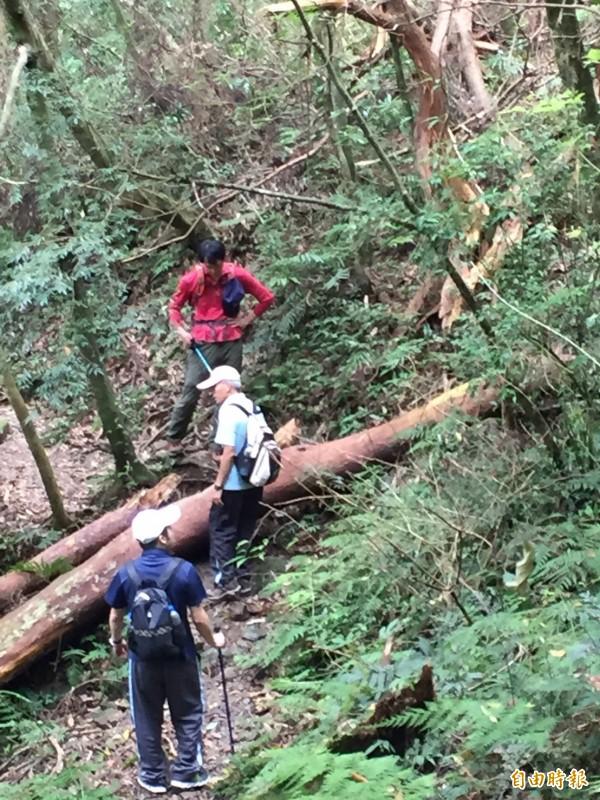 縱然是風倒木,新竹縣警方仍仔細調查有無其他可疑的人為因素。(記者黃美珠攝)