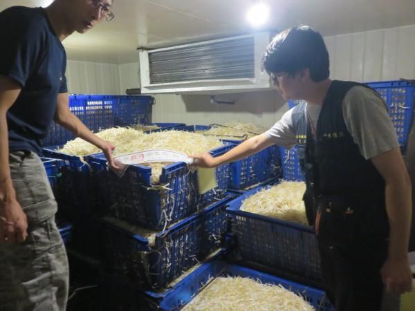 兩家違規的豆芽菜製造廠共封存超過兩千公斤成品。(圖由衛生局提供)