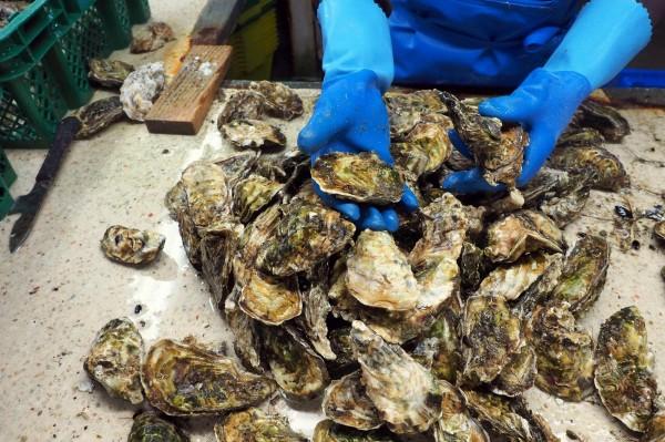 我國輸入貝類產品包括扇貝、生蠔、鮑魚、蛤犡及淡菜等,去年度被驗出不合格多是因為微生物超標和重金屬殘留。(法新社)