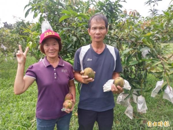 林國順和妻子蔡貴鳳以友善耕作的方式種植愛文芒果多年,種出來的芒果氣味甜度十足。(記者羅欣貞攝)
