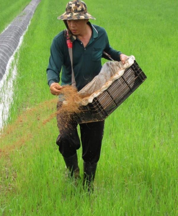 蘇程隆與新農人契作,推出「禾義米」,有民眾吃過後表示會上癮。(記者黃文瑜翻攝)