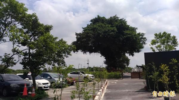 入口處就有一棵樹齡超過300年的超大榕樹。(記者廖淑玲攝)