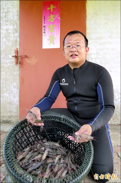 南科工程師郭言良以生態養殖方式養草蝦,經過2年的努力,成功養出11尾斤的大草蝦。(記者蔡文居攝)