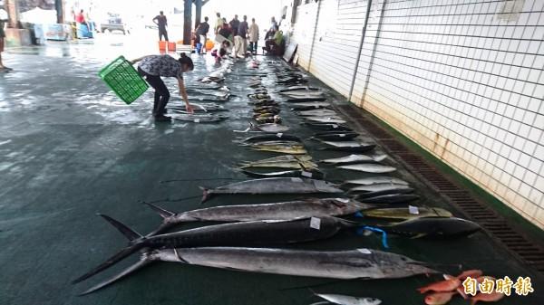 天鴿颱風海上警報已發布,富岡漁市場拍賣漁獲量也大減。(記者張存薇攝)