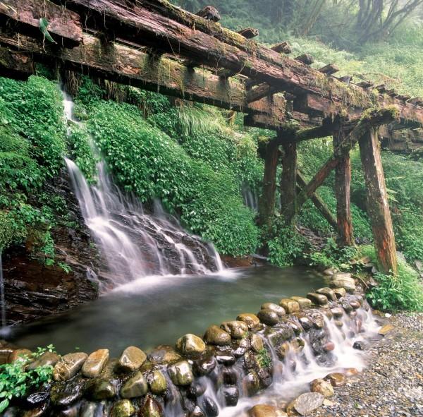 太平山森林遊樂區。(圖由林務局提供)