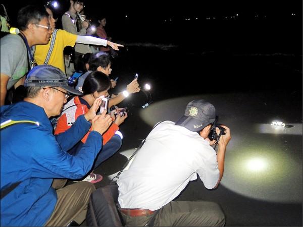 陸蟹媽媽返回海洋,釋出數百萬隻幼蟹。(壽山國家自然公園籌備處提供)