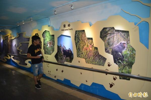 太魯閣國家公園管理處今年與花蓮火車站合作,將總長210公尺的地下道牆面,打造成為太魯閣主題展示館,民眾只要一下火車就能提前一窺太魯閣最具特色的山水生態與人文美景。(記者王峻祺攝)
