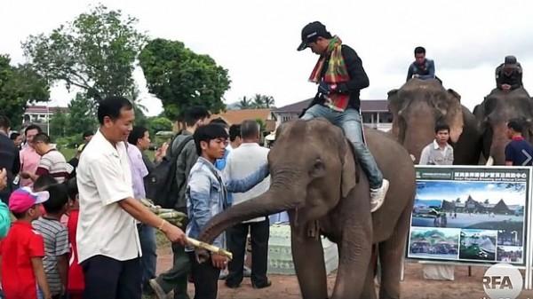 中國擬砸12兆在寮國興建大象復育中心,遭批評動機並不單純。(擷取自RFA)