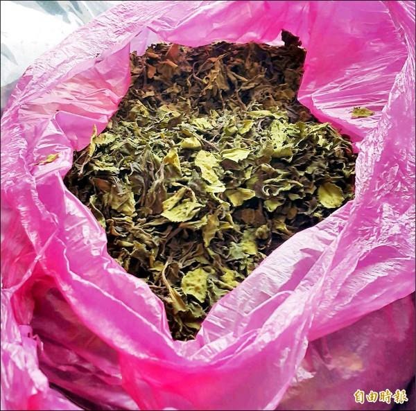 「恰特草」有「東非罌粟」之稱,乾燥後像茶葉,民眾不易分辨。(記者陳文嬋攝)