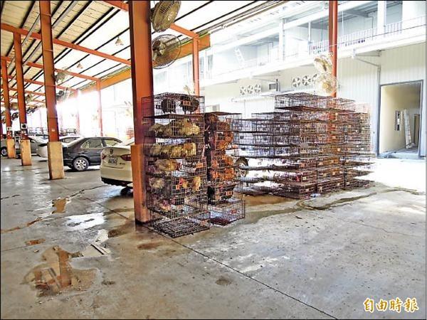 移民署新北市專勤隊等單位昨深夜突襲位於新北市泰山區的「新北市家禽運銷合作社附設屠宰場」,一口氣逮到78名逃逸外勞。(資料照)