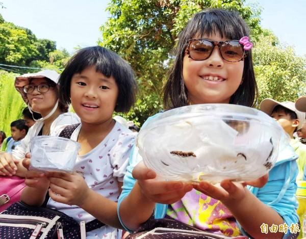 龍目國小學童今野放台灣窗螢幼蟲。(記者陳文嬋攝)