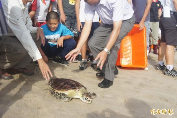 體弱小龜經過2年人工養殖,首次返回大海懷抱。(記者劉禹慶攝)