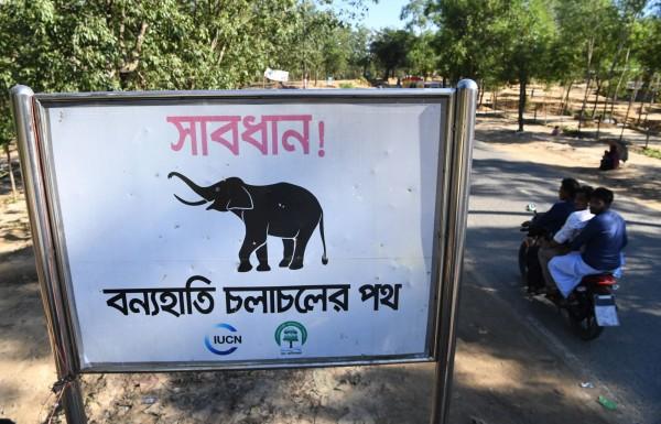 孟加拉警方表示,共計4名洛興雅難民遭野生大象殺害。圖為巴魯卡里營區附近的野象出沒警告招牌。(法新社)