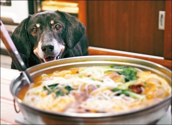 狗狗應不要食用人類餐桌的食物,過油過鹹會對腎臟造成負擔。(記者邱璟綾/攝影)