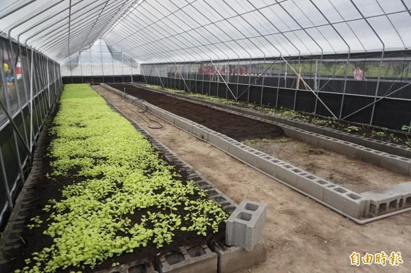 哈老農場的土耕區採自然農法種蔬菜。(記者歐素美攝)