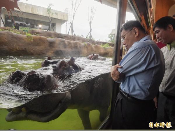 台北市長柯文哲21日出席台北市立動物園為河馬的新家「河馬浴場」舉辦的開幕儀式,並近距離觀看河馬在水中悠游。(記者黃耀徵攝)