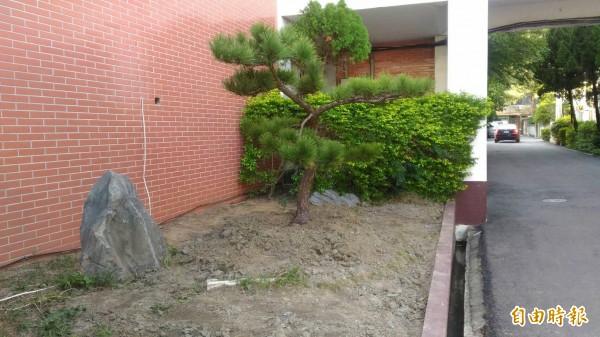 苗栗縣警察局長金浩明,在警局門口左側栽種下松樹。(記者彭健禮攝)