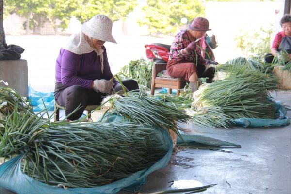 農忙時節採收,農民要排除7休1,要先徵求中央農委會同意。(資料照)