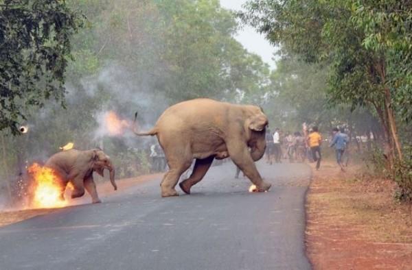 1幅大象母子遭到暴民用火攻擊的照片,標題為「地獄在這裡」,獲得野生動物攝影比賽首獎。(圖擷自《Sanctuary》官網)
