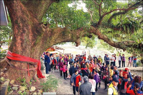 村裡的「大樹公」是一棵有百年樹齡的茄苳樹,除了是村民祈求平安的所在,在豔陽的午後也吸引不少遊人到此乘涼。(記者沈昱嘉/攝影)
