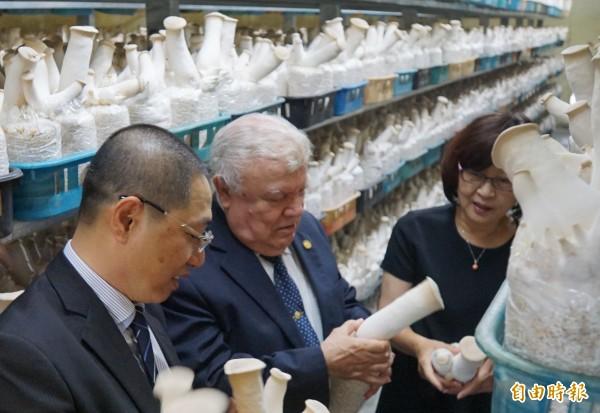 尼加拉瓜駐台大使達比亞(左二)進入杏鮑菇培養室,了解栽培狀況。(記者詹士弘攝)