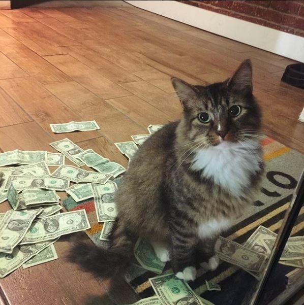 小心!這隻貓會搶你的錢去做公益!這麼積極劫富濟貧的貓完全沒看過!(圖片由CASHnip Kitty授權使用)