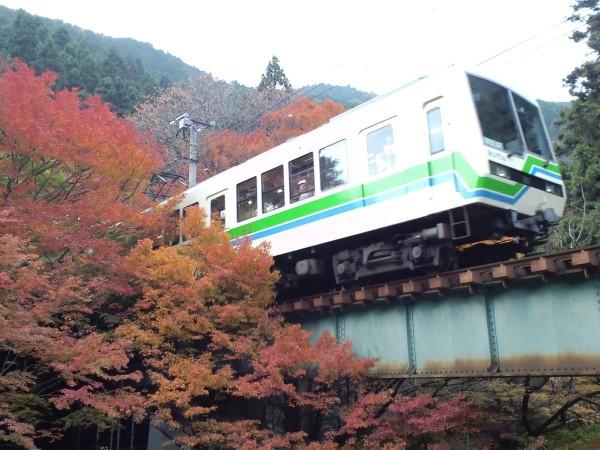 京都楓葉隧道成為近年逐漸熱門的賞楓景點。(取自「叡山電車【公式】」推特)