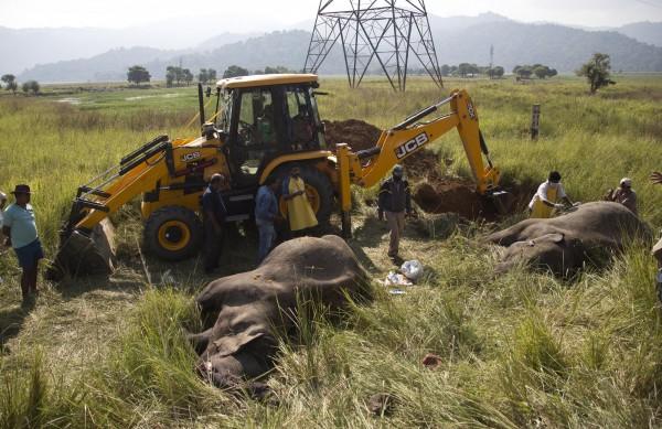 野生動物專家及獸醫趕至現場為死亡的亞洲象解剖驗屍,最後再將牠們埋葬。(美聯社)