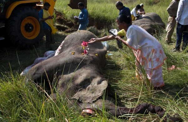 印度東北部傳出2隻大象遭火車撞死,有人前往致哀。(美聯社)