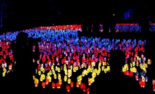 美國加州拉肯亞達的「魔法森林」燈光秀於近日展開,吸引許多遊客前往遊玩。(路透)