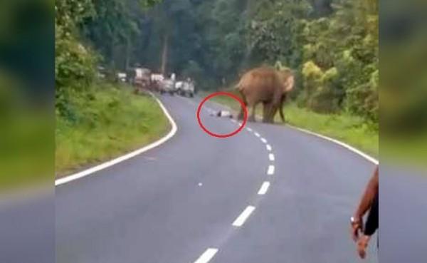 一名男子想與公路上大象自拍,反被踩死。(圖擷自NDTV)