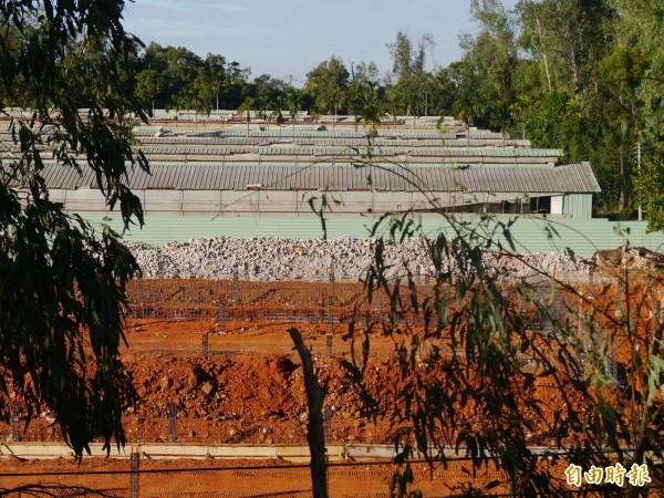 台糖外埔畜殖場約有兩萬頭豬隻,臭味影響農村居民。(記者張軒哲攝)
