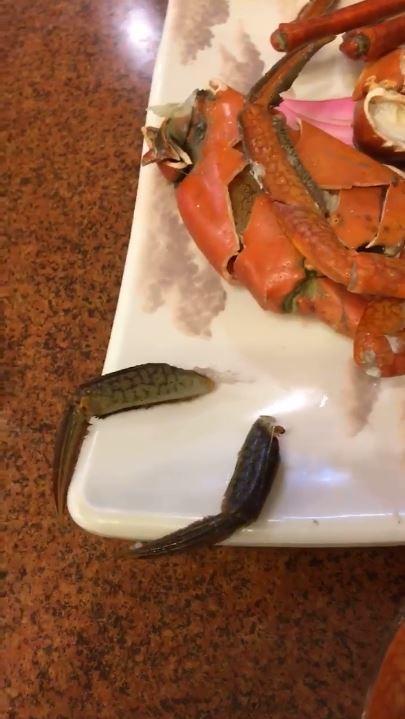 洪姓民眾表示,當時他有將螃蟹的腳折斷一小段,當做記號。(圖擷取自臉書)