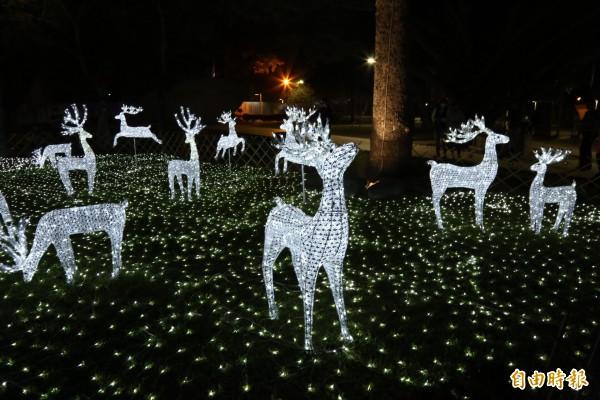 麋鹿穿梭在草地,開起耶誕派對。(記者邱芷柔攝)