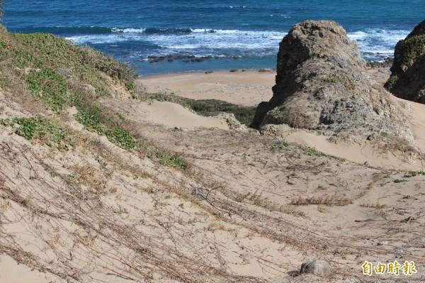 風吹砂景觀遭道路截斷,如今都成植被。(記者蔡宗憲攝)